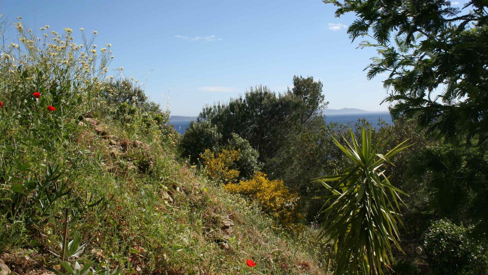 Le jardin du Rayol, sud Ouest